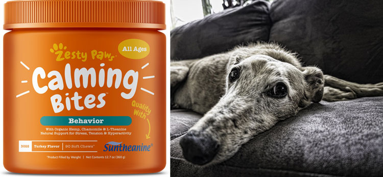 Calming-treats-for-dogs