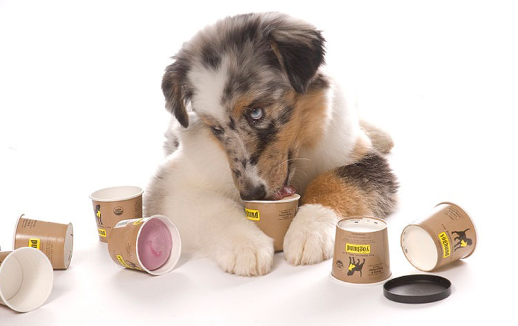 Is-yogurt-good-for-dogs