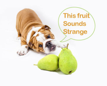 Can-dogs-eat-pears