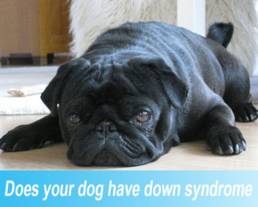 Does-your-dog-have-down-syndrome