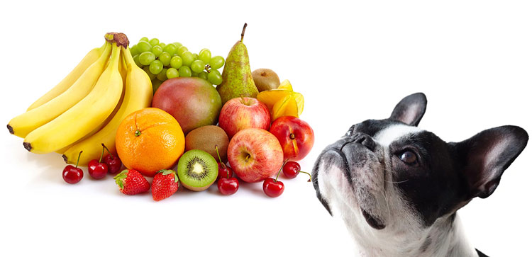 Are-pears-good-for-dogs