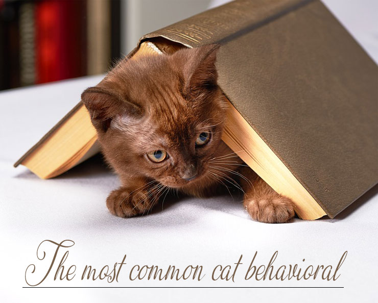Cat-behavioral