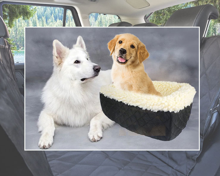 Dog diet is always an important wewpet Dog-car-seat