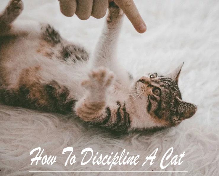 How-to-discipline-a-cat