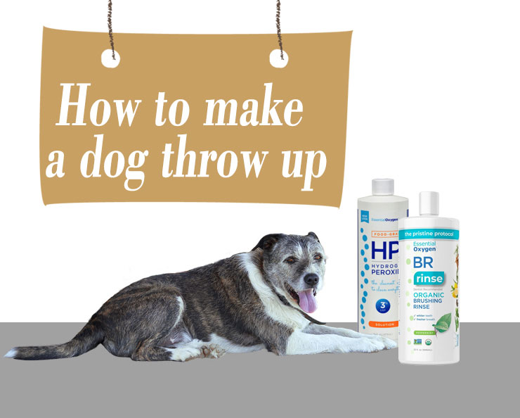 How-to-make-a-dog-throw-up