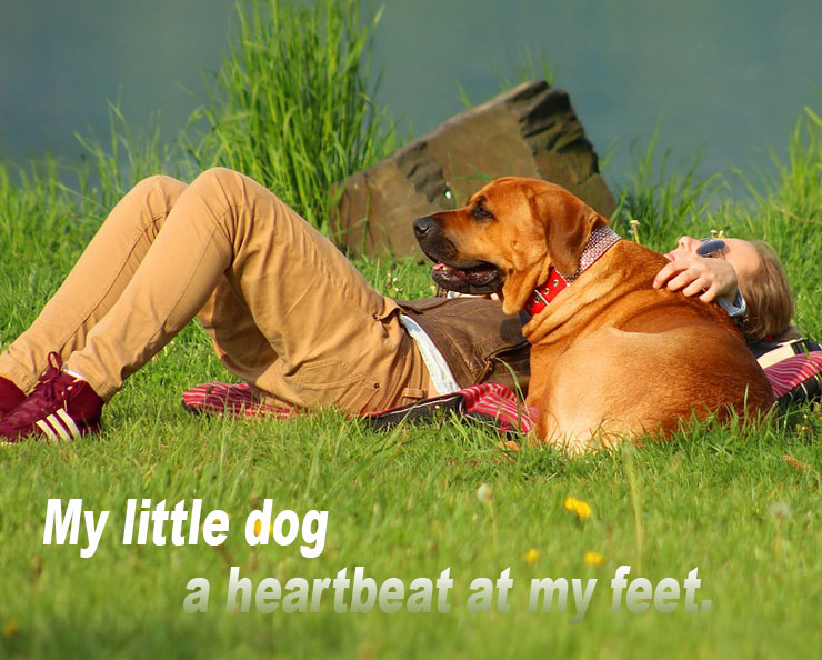 Why-do-dogs-lay-on-your-feet