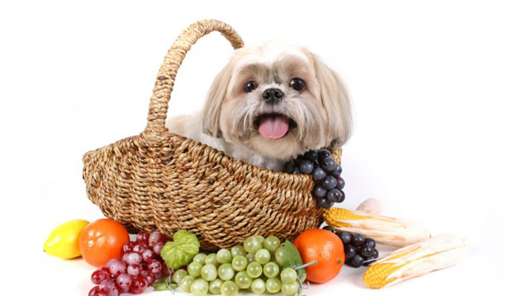 Fruit-for-dogs