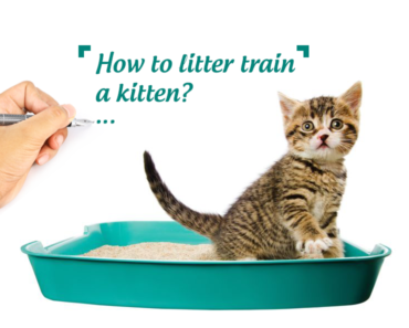 How-to-litter-train-a-kitten