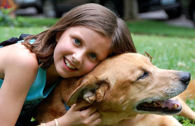 Why-do-dogs-like-to-be-pet-patted-the-dog