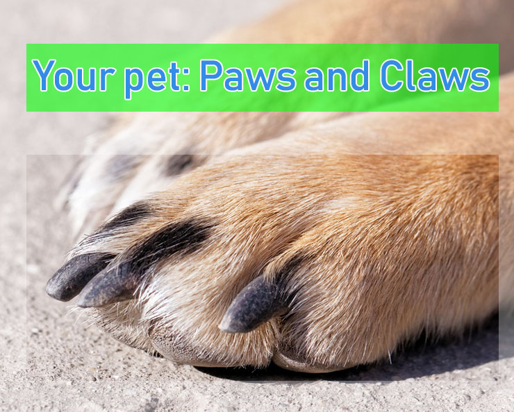 Paws-and-claws