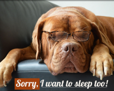 Should-you-wake-a-sleeping-dog