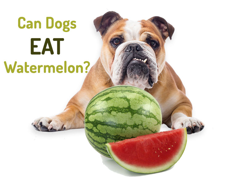 Can-dogs-eat-watermelon