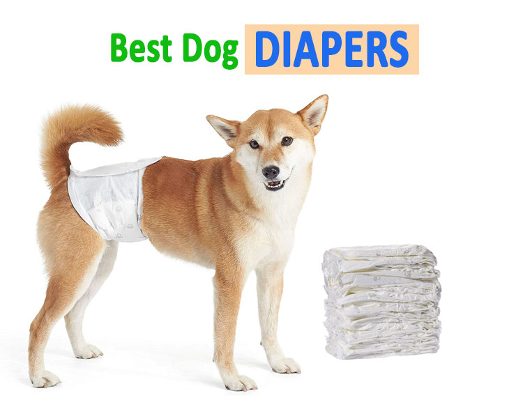 Dog-diapers