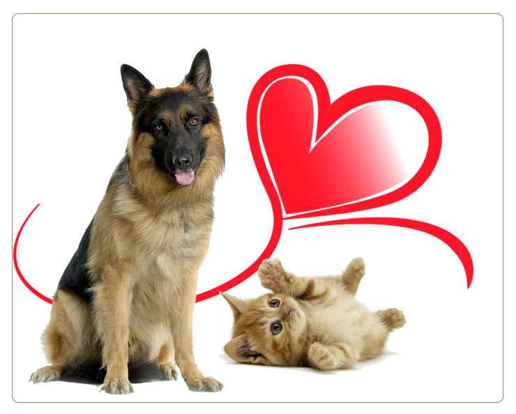 Are-german-shepherds-good-with-cats