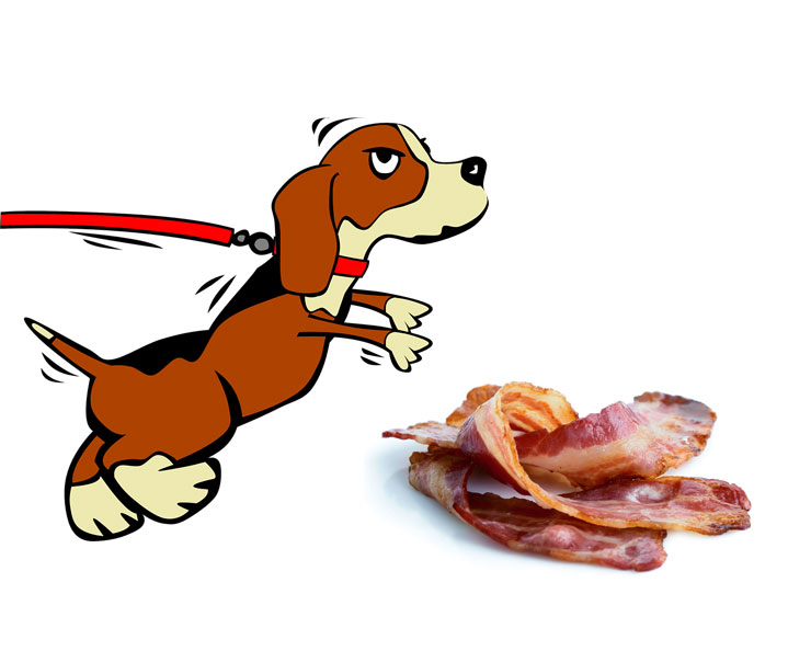 Can-dogs-eat-raw-bacon